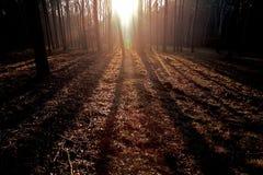 Sonnenuntergang im Herbstwald stockbild