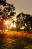 Sonnenuntergang im Holz lizenzfreies stockfoto