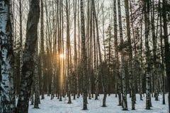 Sonnenuntergang im Holz Lizenzfreie Stockbilder