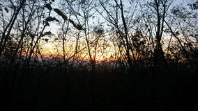 Sonnenuntergang im Holz stockfotos