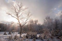 Sonnenuntergang im Holz zwischen den Bäumen im Winter Stockfotografie