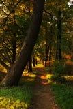 Sonnenuntergang im Kirow-Park Lizenzfreie Stockbilder