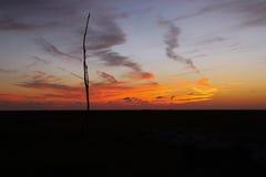 Sonnenuntergang im Louisiana-Sumpf lizenzfreie stockfotografie