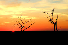 Sonnenuntergang im Louisiana-Sumpf lizenzfreies stockbild