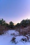 Sonnenuntergang im schneebedeckten Kiefernwald mit einem sichelförmigen Mond und dem polaren Stern in der Ecke Russland, Stary Kr Stockbild
