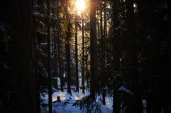 Sonnenuntergang im schneebedeckten Wald Lizenzfreie Stockfotos