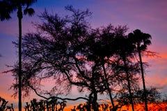 Sonnenuntergang im silouette Stockfoto