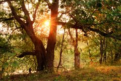 Sonnenuntergang im Wald Stockfotos