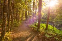 Sonnenuntergang im Wald Lizenzfreie Stockbilder