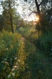 Sonnenuntergang im Wald Lizenzfreies Stockfoto