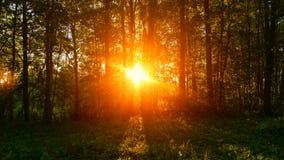 Sonnenuntergang im Wald Stockfoto