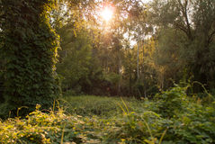 Sonnenuntergang im Wald lizenzfreie stockfotos