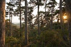 Sonnenuntergang im Wald am Ende des Sommers Stockbilder