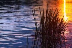 Sonnenuntergang im Wasser Stockbild