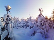Sonnenuntergang im Winterwald Stockbild