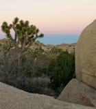 Sonnenuntergang am Joshua-Baum-Park Lizenzfreies Stockfoto