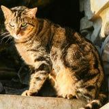 Sonnenuntergang-Katze Lizenzfreie Stockfotos