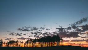 Sonnenuntergang in Kiefernwald-Sun-Sonnenschein Sonnenlichtsonne wald des sonnigen Frühlinges in der Koniferenstrahlt Glanz durch stock footage