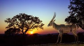 Sonnenuntergang Landschaft und waterbuck in Nationalpark Kruger lizenzfreie stockfotografie
