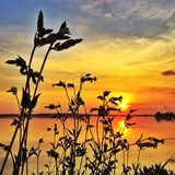 Sonnenuntergang mit Anlagen Lizenzfreie Stockfotos