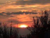 Sonnenuntergang mit Anlagen im Vordergrund Stockfoto