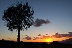 Sonnenuntergang mit Baumschattenbild Stockfotografie