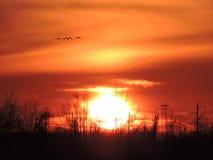 Sonnenuntergang mit Gänsen stockfotos