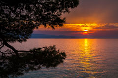 Sonnenuntergang mit Kiefern in Brela Lizenzfreie Stockfotos