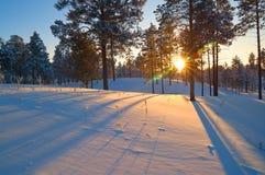 Sonnenuntergang mit langen Schatten. Stockfotos
