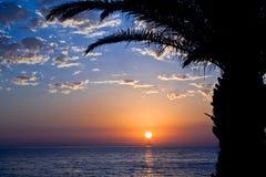 Sonnenuntergang mit Meer und Palme Stockfotografie
