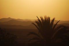 Sonnenuntergang mit Palmen und Wüste lizenzfreies stockfoto