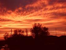 Sonnenuntergang mit Schattenbild der Bäume Stockfotos