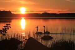 Sonnenuntergang mit Schwänen lizenzfreies stockbild