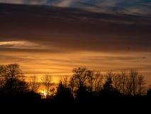 Sonnenuntergang mit Vögeln Lizenzfreie Stockfotografie