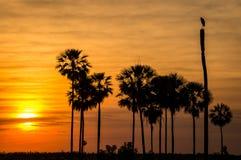 Sonnenuntergang mit Vogel und Bäumen in Pantanal, Paraguay stockbild