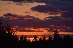 Sonnenuntergang mit Wolken und Bäumen im Schattenbild lizenzfreie stockfotografie