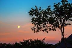 Sonnenuntergang, Mond, Baum Lizenzfreie Stockfotos