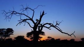 Sonnenuntergang in Namibia stockbilder