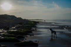 Sonnenuntergang in Northumberland lizenzfreie stockbilder