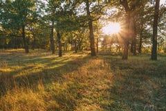 Sonnenuntergang oder Sonnenaufgang in Autumn Forest Landscape Sun-Sonnenschein mit Stockfoto
