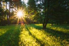 Sonnenuntergang oder Sonnenaufgang in Forest Landscape Sun-Sonnenschein mit natürlichem Lizenzfreie Stockfotos