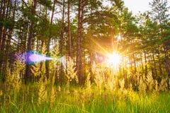 Sonnenuntergang oder Sonnenaufgang in Forest Landscape Sun-Sonnenschein mit natürlichem Lizenzfreies Stockfoto