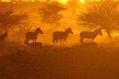 Sonnenuntergang am Okaukeujo waterhole Lizenzfreies Stockfoto