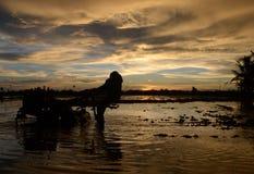 Sonnenuntergang am Paddyfeld stockbilder