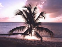 Sonnenuntergang-Palme Stockfotografie