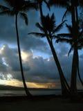Sonnenuntergang-Palmen Stockfotos