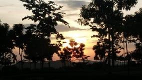Sonnenuntergang am Park Stockbilder