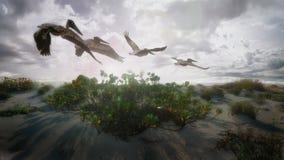 Sonnenuntergang-Pelikan Stockfoto