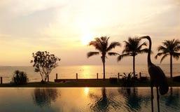 Sonnenuntergang-Reiher stockfoto