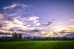 Sonnenuntergang am Reisfeld Lizenzfreie Stockfotografie